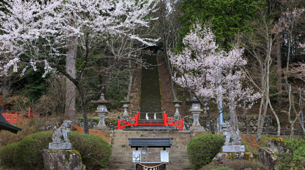 東照宮の境内の桜はとても美しく、市民の花見の場所となっています。